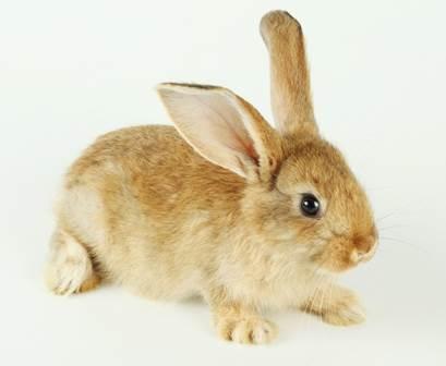 创意黑白装饰画 动物兔子